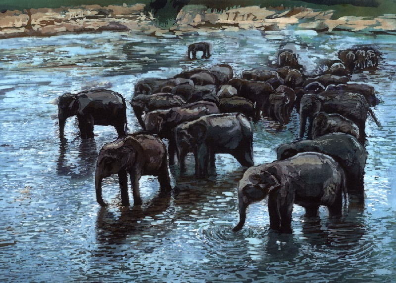 Elephants Bathing, Pinnawela, Sri Lanka