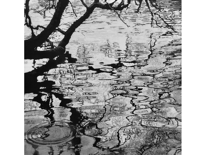 Reflections of a Tree