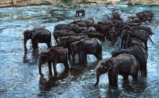 Elephants Bathing, Elephant Orphanage, Pinnawela, Sri Lanka